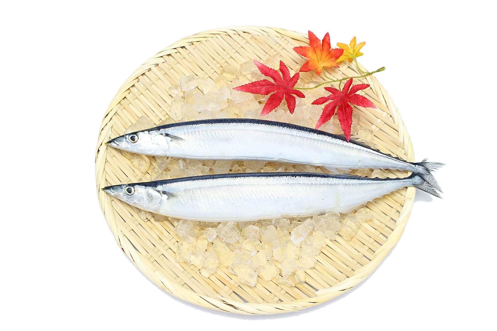 秋刀魚の噺。秋刀魚は炙りでこれからが旬!北海道の秋刀魚は今が美味しい