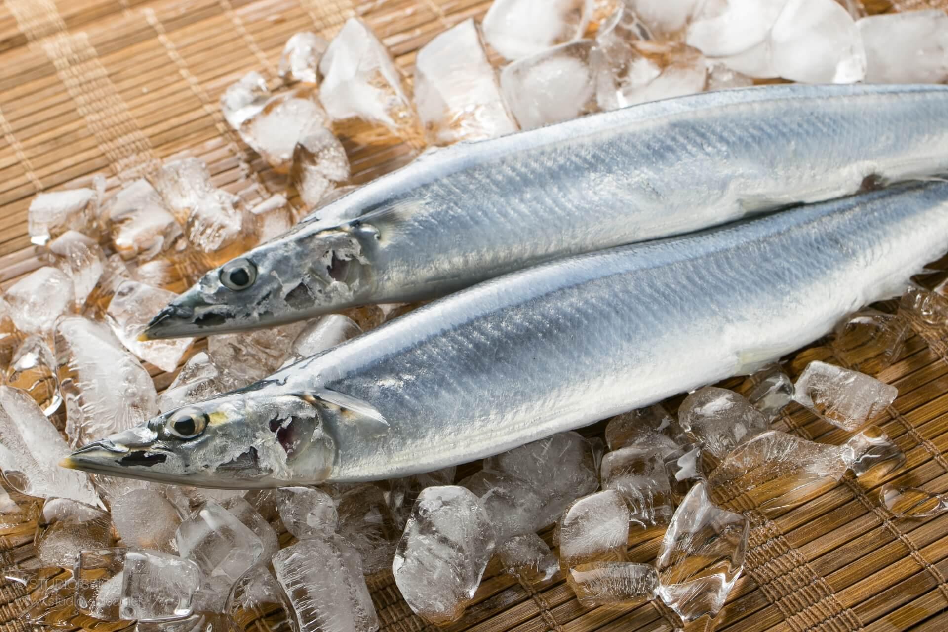 北海道の秋刀魚は今が美味しい!?秋刀魚の旬は?