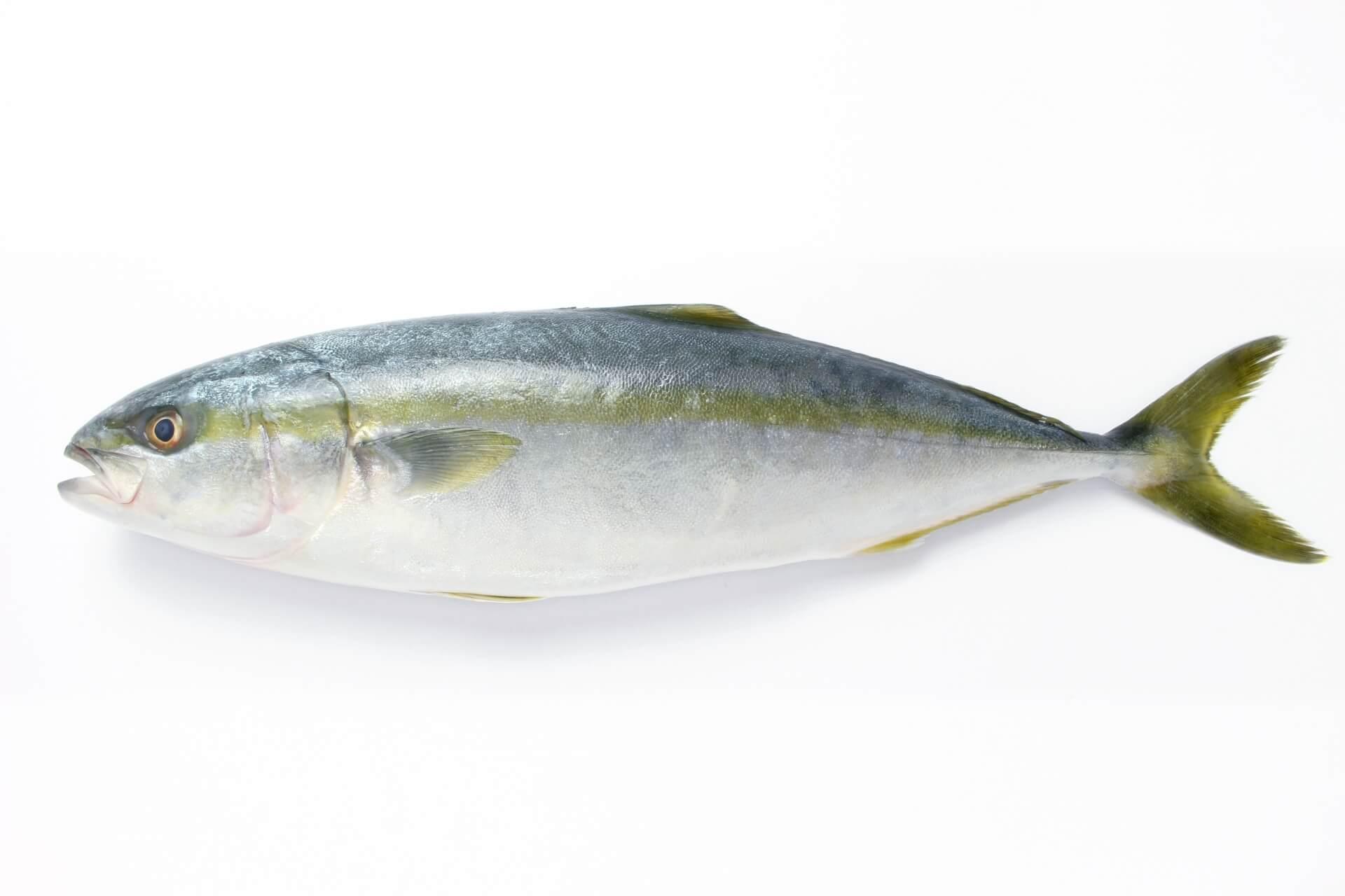 出世したい人におすすめの出世魚の代表格「鰤(ぶり)」