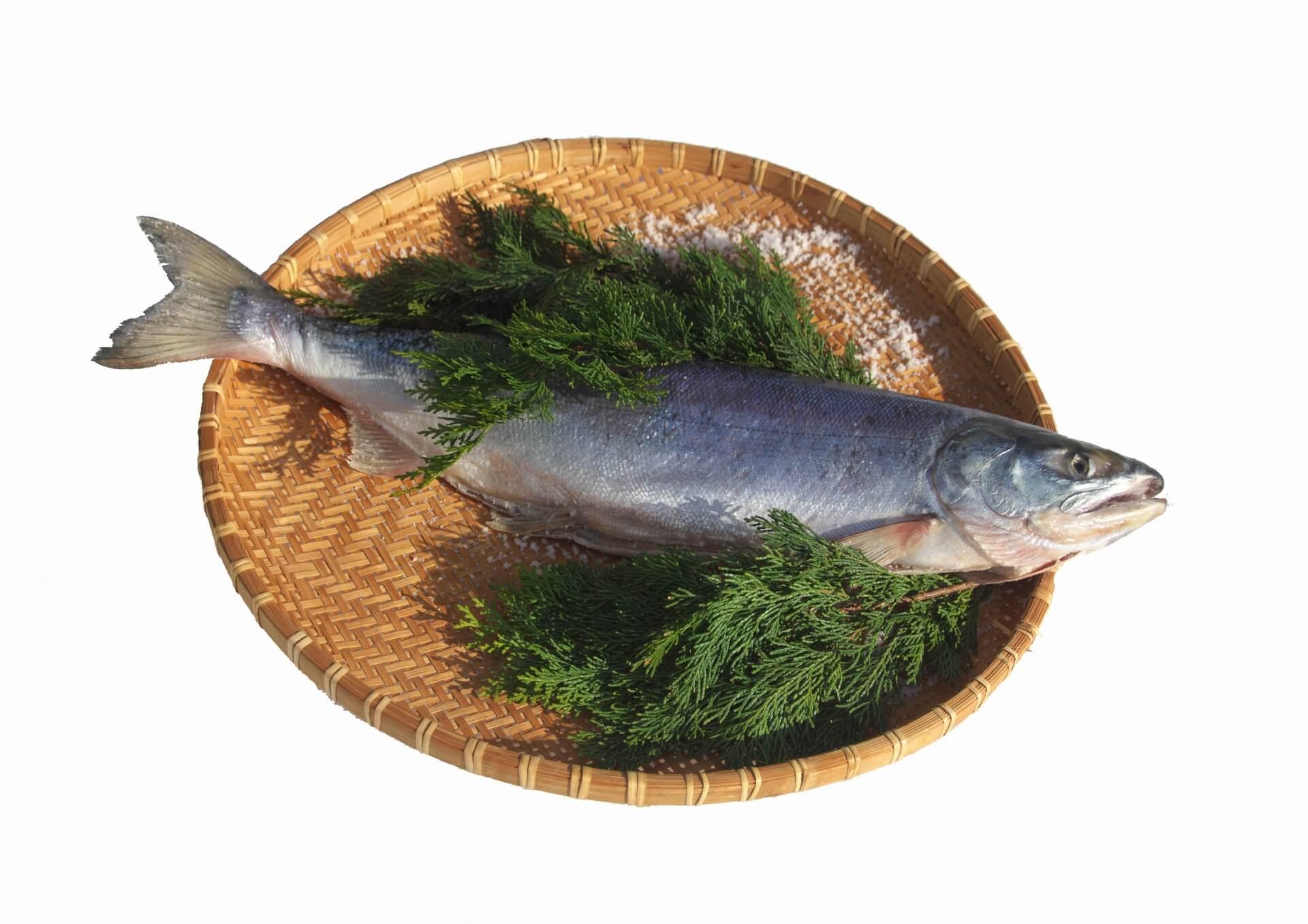 出世、災いを避ける、子孫繁栄いろいろな意味を持つ「鮭」
