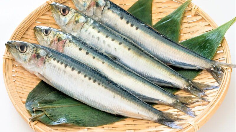 梅雨時期に美味しい旬の魚!もちろん寿司ネタでご紹介!